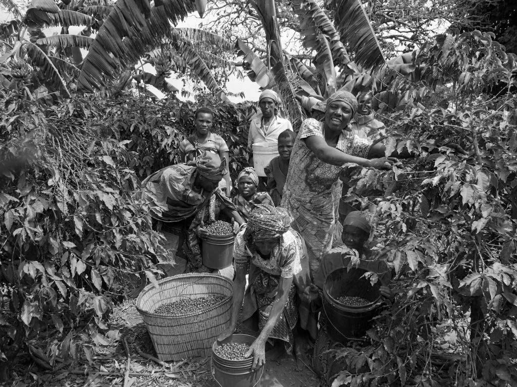 Small scale Tanzania coffee farmers