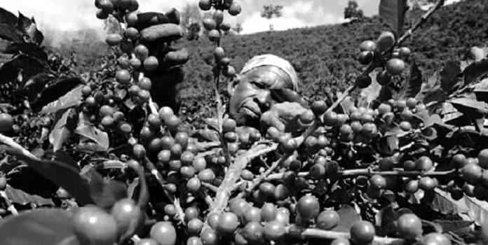 Summary of the Tanzania Coffee Sector