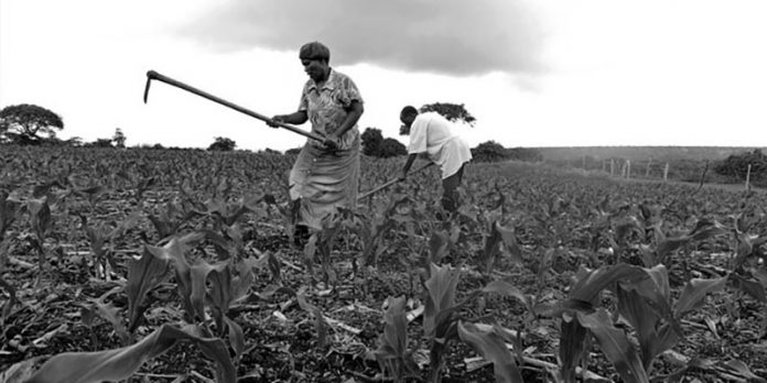 Adoption of Technologies of Maize Production in Tanzania Southern Region