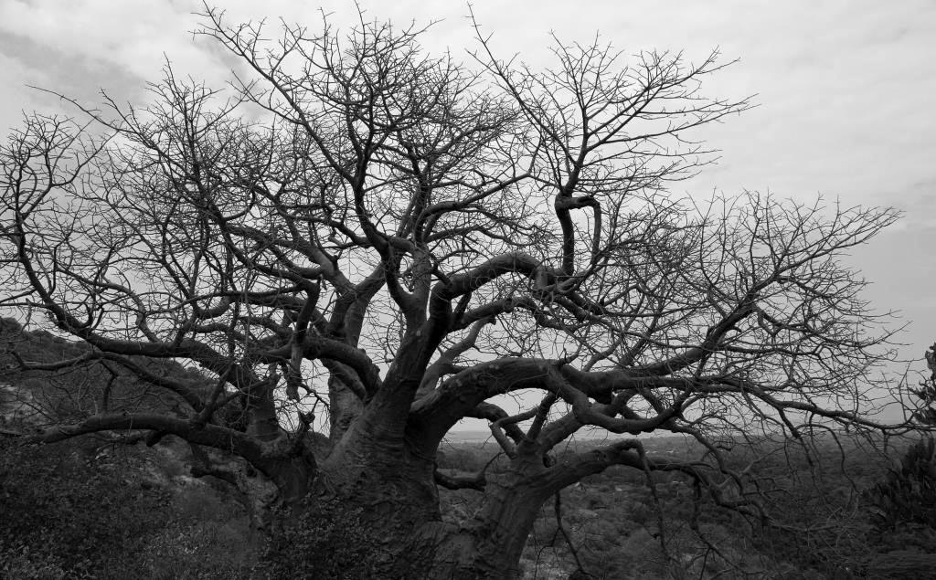 Lake Manyara National Park African Baobab Tree