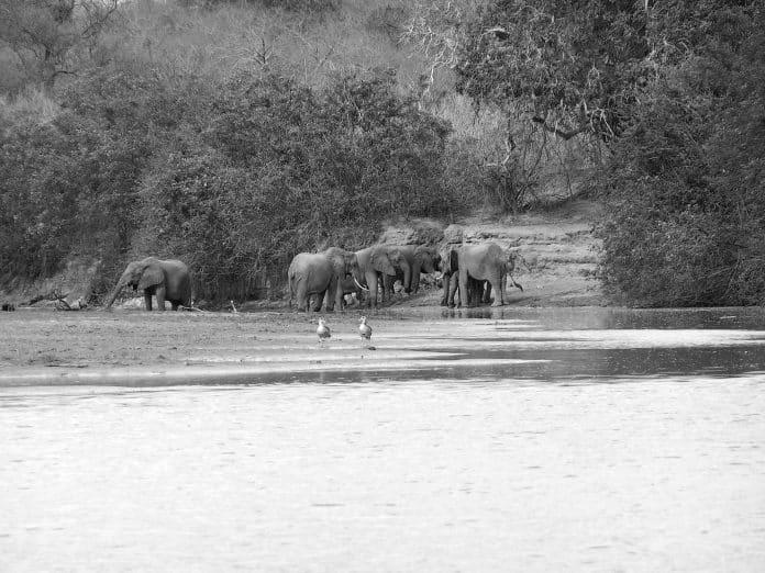 A Quick Walkthrough – Selous Game Reserve
