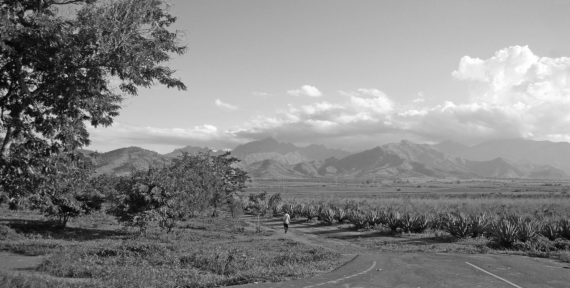 Sisal plantations surrounding Uluguru mountains